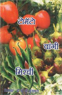 टोमॅटो लागवड,प्रक्रिया व व्यापार